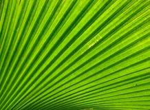 zielona urlopu konsystencja obrazy stock