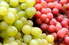 zielona winogrono czerwień fotografia stock