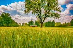 Zielona wiosna na śródpolny II zdjęcia royalty free