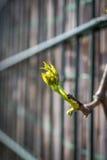 Zielona wiosny gałązka na zamazanym tle Świeżość liście przy wiosną zbliżenie obrazy royalty free