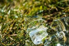 Zielona wiosny trawa na nim kostka lodu kłamstwo sunshine meadow gazon tło lub tekstura zdjęcia royalty free