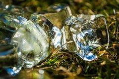 Zielona wiosny trawa na nim kostka lodu kłamstwo sunshine meadow gazon tło lub tekstura obraz royalty free