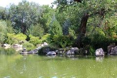 Zielona woda przy zoo Fotografia Royalty Free
