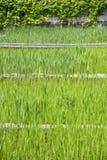 Zielona wodna trawa obrazy stock
