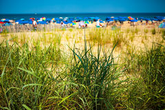 Zielona Wydmowa trawa przy plażą Obraz Royalty Free