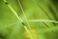 Zielona Zielona trawa Obrazy Stock