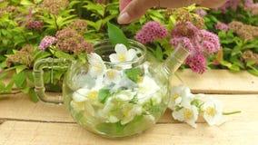 Zielona ziołowa herbata dekorował z sprig kwiat zbiory