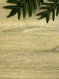 Zielona zwrotników liści rama z kopii przestrzenią na drewnie zdjęcie stock