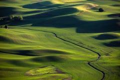 zielone łąki fotografia stock
