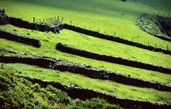 zielone łąki obraz stock