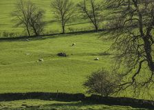 Zielone łąki i drzewa, Szczytowy okręg, Anglia UK obraz stock