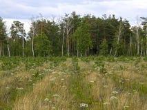 Zielone łąki i piękni drzewa Zdjęcie Royalty Free