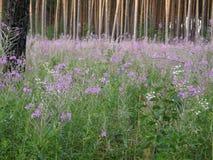 Zielone łąki i piękni drzewa Zdjęcie Stock