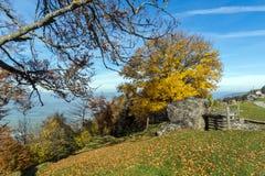 Zielone łąki nad jezioro lucerna blisko góry Rigi, Alps, Szwajcaria fotografia royalty free