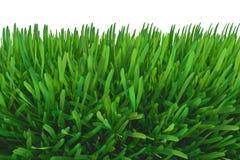 zielone łąki trawy ilustracji