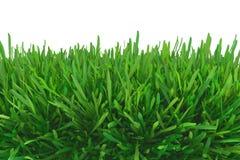 zielone łąki trawy royalty ilustracja