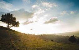 Zielone łąki w górach Turkmenistan Zdjęcie Stock