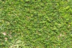 zielone ściany fotografia stock