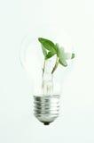 Zielone światło żarówka Obrazy Stock