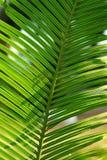 Zielone świeże rośliny Zdjęcia Stock