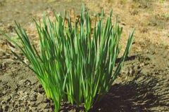 Zielone świeże rośliny Zdjęcie Stock