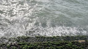Zielone algi na kamienni schodki na morza lub oceanu wybrzeżu zdjęcie wideo