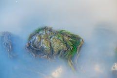 Zielone algi pod wodą Obraz Stock