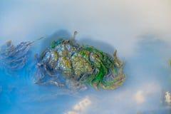 Zielone algi pod wodą Obrazy Royalty Free