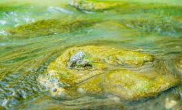 Zielone algi pod wodą Zdjęcia Stock