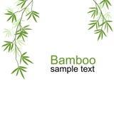 Zielone bambus gałąź Zdjęcia Stock