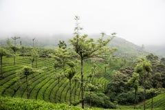 zielone bujny lasów fotografia stock