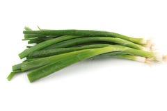 Zielone cebule zdjęcie stock