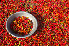 zielone chillies czerwone Fotografia Royalty Free