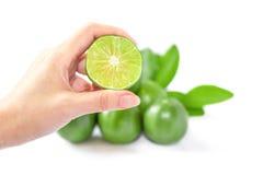 zielone cytryny Fotografia Stock
