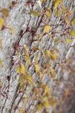 Zielone czerwone pięcie rośliny na ścianie Zdjęcia Royalty Free