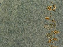 zielone dżinsy strasses Zdjęcia Royalty Free