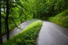 Zielone drogi w drewnach zdjęcie royalty free