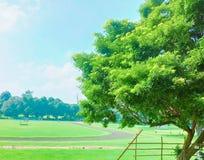 zielone drzewa obraz royalty free