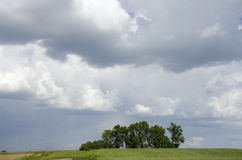 zielone drzewa Zdjęcie Stock