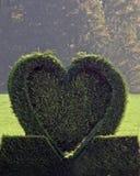 zielone drzewa iglastego serce Zdjęcia Royalty Free