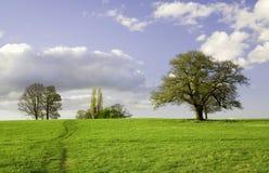 zielone drzewa polowe nieba zdjęcia royalty free