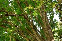 zielone drzewa t?o Natura, ?rodowisko, ekologia projekt fotografia royalty free