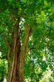 zielone drzewa t?o Natura, ?rodowisko ekologii projekt zdjęcia royalty free