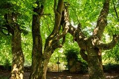 zielone drzewa t?o Natura, ?rodowisko ekologii projekt zdjęcie stock