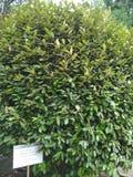zielone drzewa fotografia royalty free