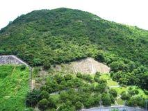 Zielone góry z zielonymi drzewami w obszarze zamieszkałym w Hong Kong obrazy royalty free
