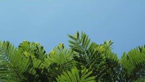 Zielone gałąź I niebo