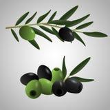 Zielone i czarne oliwki ustawiać Fotografia Stock