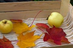 zielone jabłka dwa Zdjęcia Royalty Free