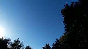 Zielone jodły, las z niebieskim niebem wiatr szasta gałąź drzewa zdjęcie wideo
